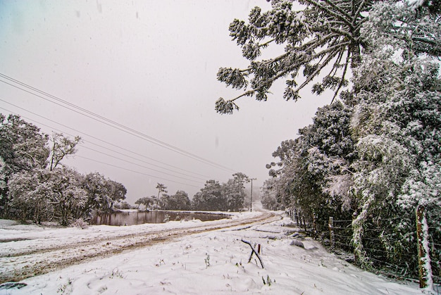 Serra De Santa Catarina, Południowy Region Brazylii, Jedno Z Największych Zjawisk śnieżnych, Jakie Kiedykolwiek Widziano W Całej Jej Historii. Premium Zdjęcia