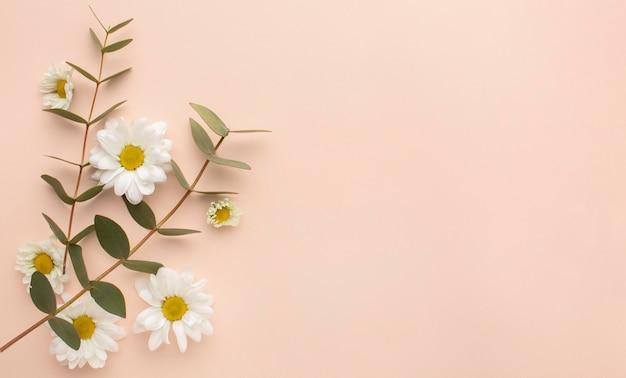 Skopiuj Kwitnące Kwiaty Przestrzeni Darmowe Zdjęcia