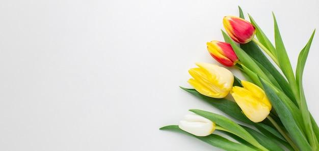 Skopiuj Miejsca Tulipany Darmowe Zdjęcia