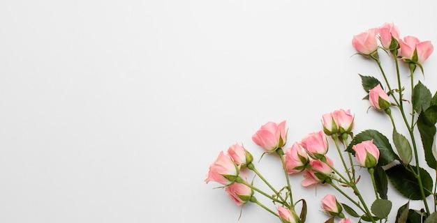 Skopiuj Róże Przestrzeni Darmowe Zdjęcia