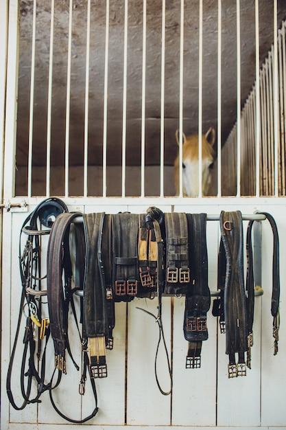 Skóra Osiodłuje Konia W Stajni Premium Zdjęcia