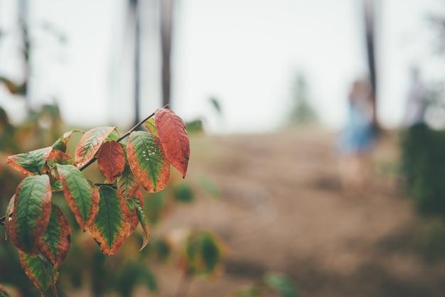 Skupiający Się Jesień Liście Z Zamazanym ślubem Dobierają Się Na Tle Premium Zdjęcia