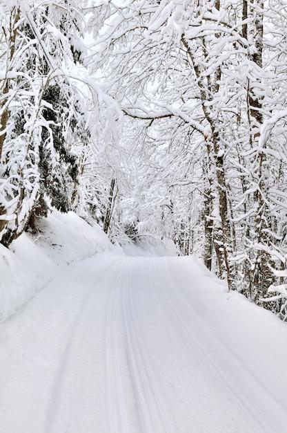 Slade Przejście Lasu W Zimie Premium Zdjęcia