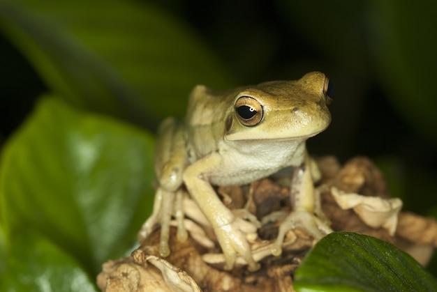 Śliczna żaba Siedzi Wśród Liści Z Niewyraźną ścianą Darmowe Zdjęcia