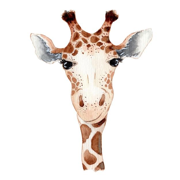 Śliczna żyrafy Kreskówki Akwareli Ilustracyjna Ręka Rysujący Zwierzę Premium Zdjęcia