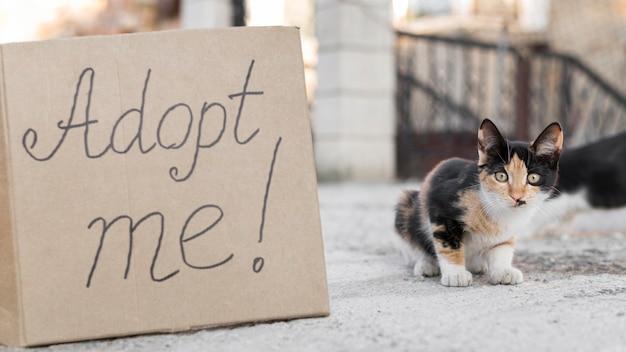 Śliczne Koty Na Zewnątrz Ze Znakiem Adoptuj Mnie Darmowe Zdjęcia