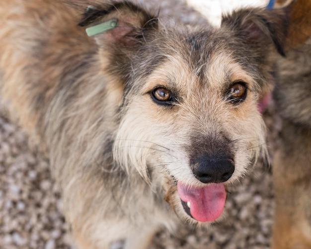 Śliczne Psy Czekające Na Kogoś Pod Opieką Darmowe Zdjęcia