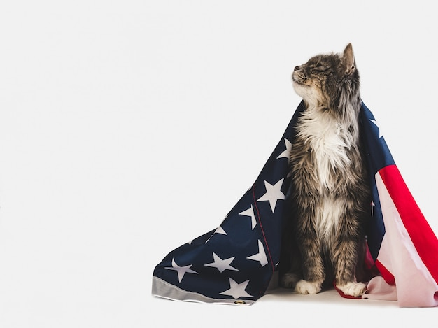 Śliczniutki I Amerykańską Flagę. Sesja Zdjęciowa W Studio Premium Zdjęcia