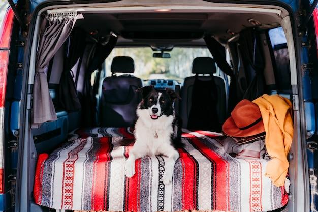 Śliczny Border Collie Pies Relaksuje W Samochodzie Dostawczym. Koncepcja Podróży Premium Zdjęcia