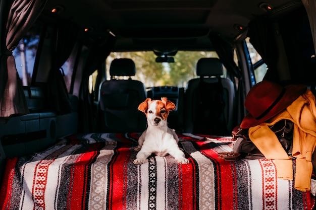 Śliczny Jack Russell Pies Relaksuje W Samochodzie Dostawczym. Koncepcja Podróży Premium Zdjęcia