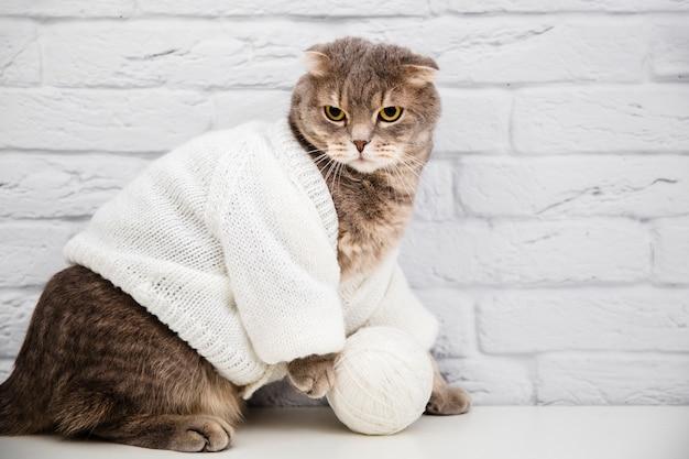 Śliczny kot z wełnianym swetrem Darmowe Zdjęcia