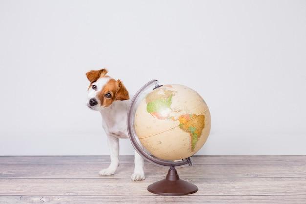 Śliczny Mały Piękny Pies Siedzi Na Podłodze, Biała ściana Ze światem świata Poza Tym. Koncepcja Podróży I Edukacji. Styl życia Premium Zdjęcia