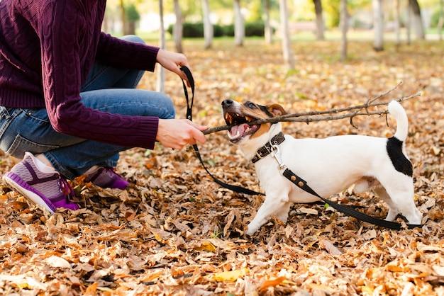 Śliczny Mały Pies Bawić Się Z Kobietą Darmowe Zdjęcia