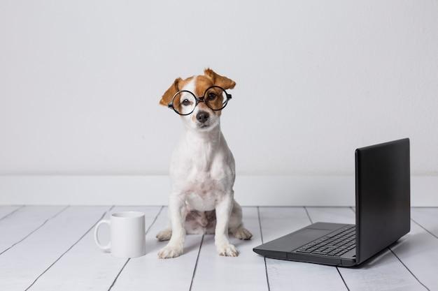 Śliczny Młody Małego Psa Obsiadanie Na Podłoga I Działanie Na Laptopie. Poza Nim W Okularach I Filiżance Herbaty Lub Kawy. Zwierzęta W Domu Premium Zdjęcia