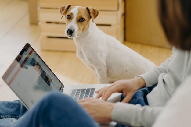 Śliczny pies siedzi, patrzy prosto w kamerę Premium Zdjęcia