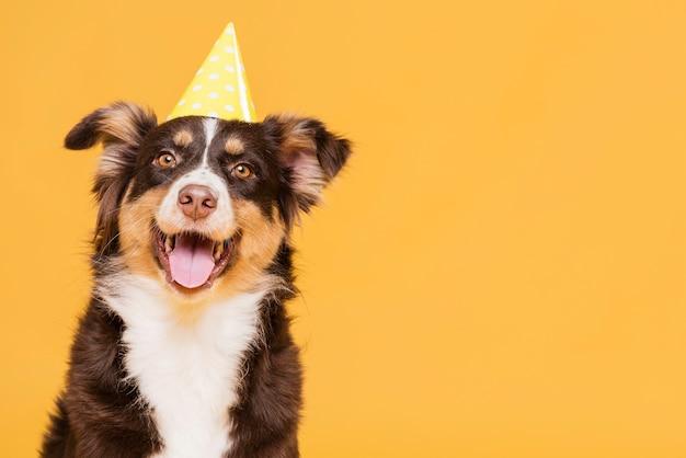 Śliczny Pies W Kapeluszu Darmowe Zdjęcia