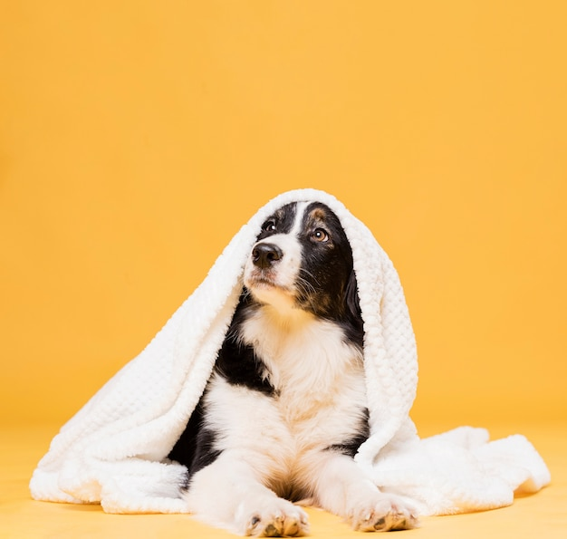 Śliczny Pies Z Ręcznikiem Darmowe Zdjęcia