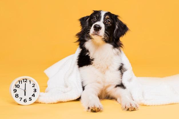 Śliczny Pies Z Zegarem Premium Zdjęcia