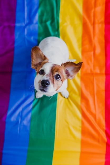 Śliczny psi jack russell siedzi na tęczy flaga lgbt w sypialni. Premium Zdjęcia
