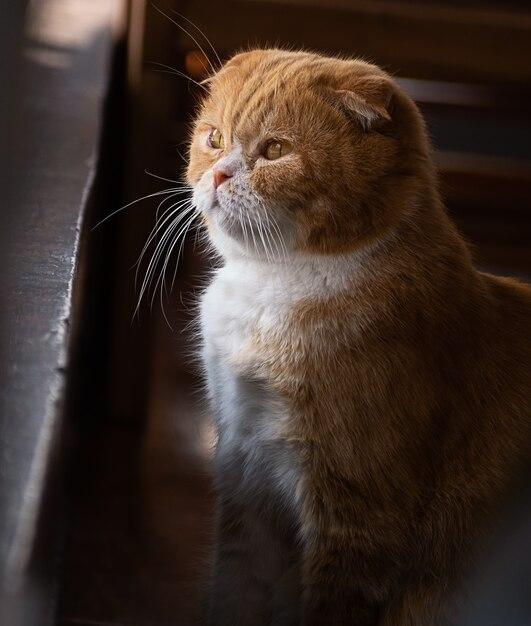 Śliczny samotny kot siedzi i patrzy na zewnątrz, Premium Zdjęcia