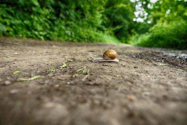 Ślimak Pełzający Po Lesie Premium Zdjęcia