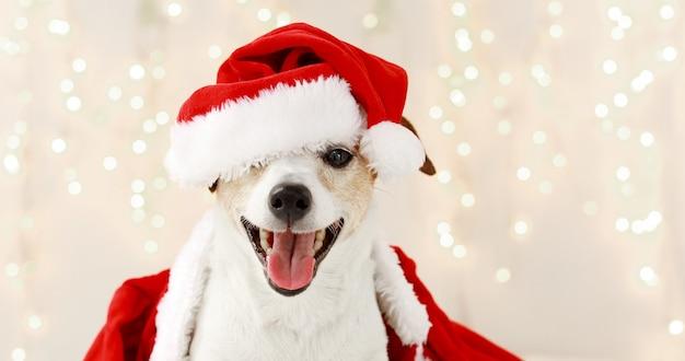 Słodki Pies W Stroju Na Boże Narodzenie Premium Zdjęcia