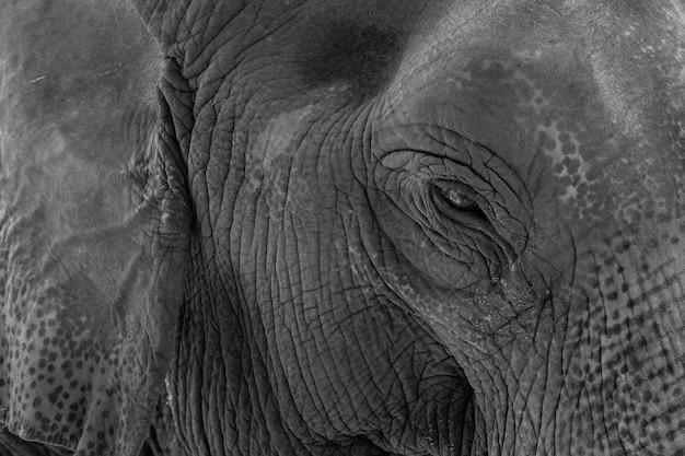 Słoń, Zwierzę Z Tajlandii, Duże Zwierzę, Słoń Ayutthaya Premium Zdjęcia