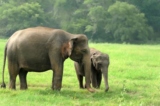 Słonie W Naturze Darmowe Zdjęcia
