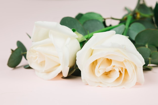 Ślubne białe róże Darmowe Zdjęcia
