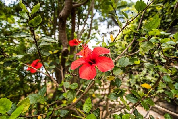 Słynny Ogród Botaniczny W Funchal Na Maderze W Portugalii Darmowe Zdjęcia