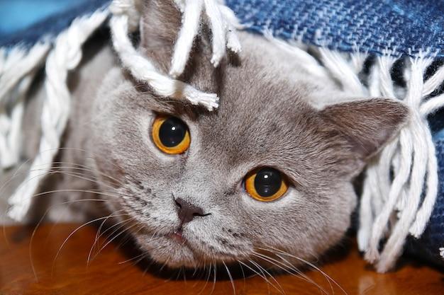 Smutny kot pod kołdrą Premium Zdjęcia