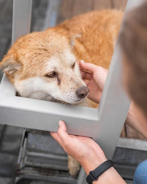 Smutny Pies W Schronisku Będący Pieszczotą Kobiety Darmowe Zdjęcia