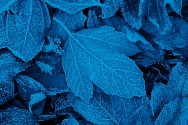Śnieg I Mróz Na Jesiennych Liściach. Modny Niebieski Kolor. Premium Zdjęcia