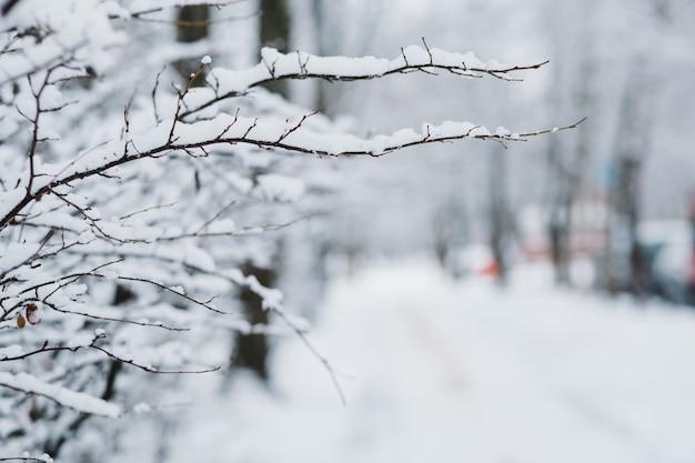 Śnieg na gałęziach w zimie Premium Zdjęcia
