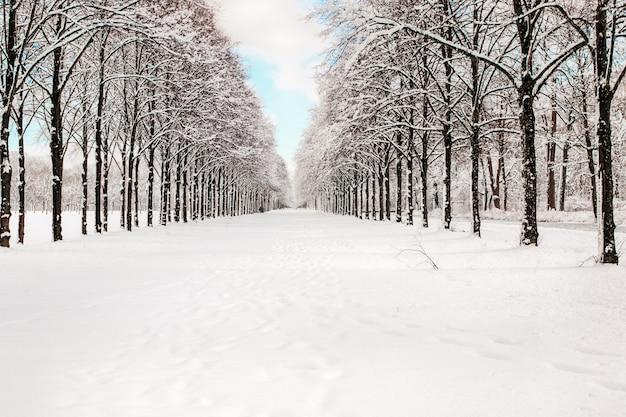 Śnieżna ścieżka Do Kilku Drzew W Lesie Premium Zdjęcia