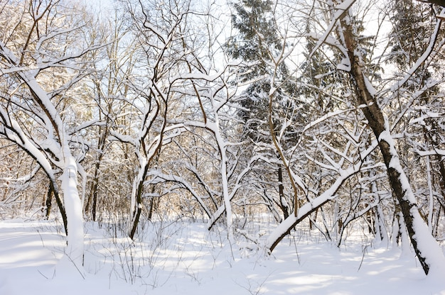 Śnieżny zima las Premium Zdjęcia