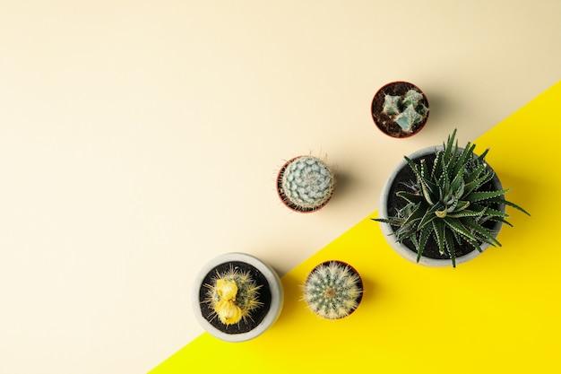 Soczyste Rośliny Na Dwukolorowej Powierzchni Premium Zdjęcia