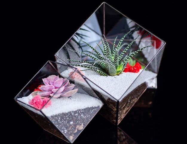 Soczyste Rośliny W Szklanym Pudełku Premium Zdjęcia