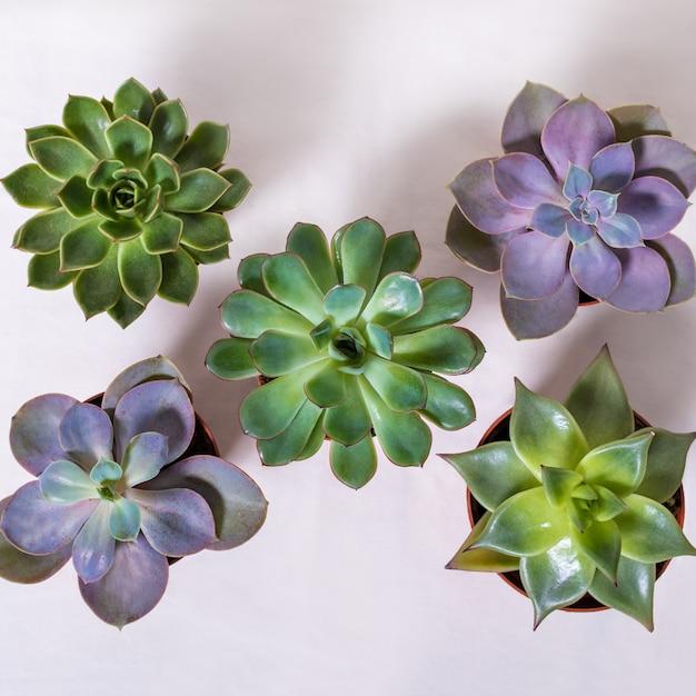 Soczyste Rośliny Z Góry Premium Zdjęcia