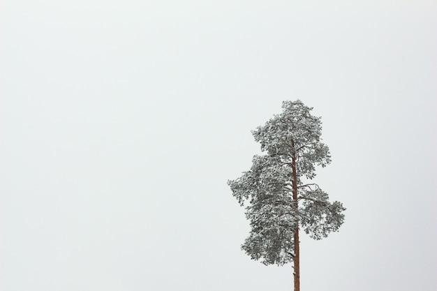 Sosna w śniegu samotny z miejsca kopiowania Premium Zdjęcia