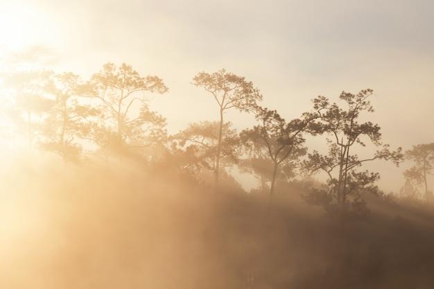 Sosnowy las w porannym czasie o godz Premium Zdjęcia
