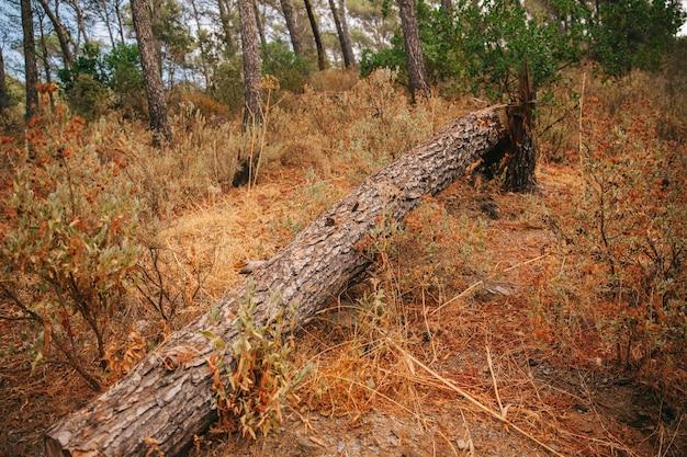 Spadające Drzewo W Przyrodzie Darmowe Zdjęcia