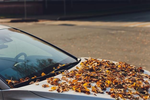 Spadające Jesienne Liście Na Przedniej Szybie Samochodu. Premium Zdjęcia