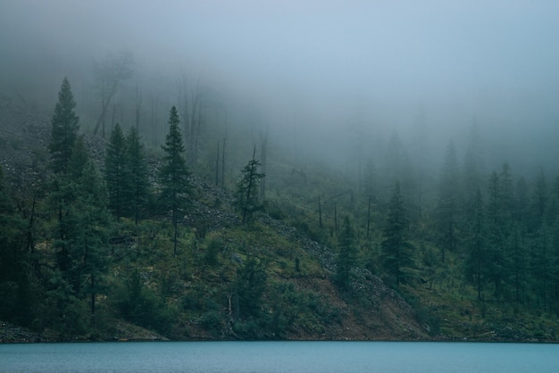 Spokojny Widok Na Alpejski Ciemny Las W Gęstej Mgle W Pobliżu Stromego Brzegu Jeziora Górskie. Atmosferyczny Mglisty Krajobraz Z Niskimi Chmurami I Spokojną Wodą. Drzewa Iglaste Na Stromym Zboczu. Hipster, Dźwięki W Stylu Vintage. Premium Zdjęcia