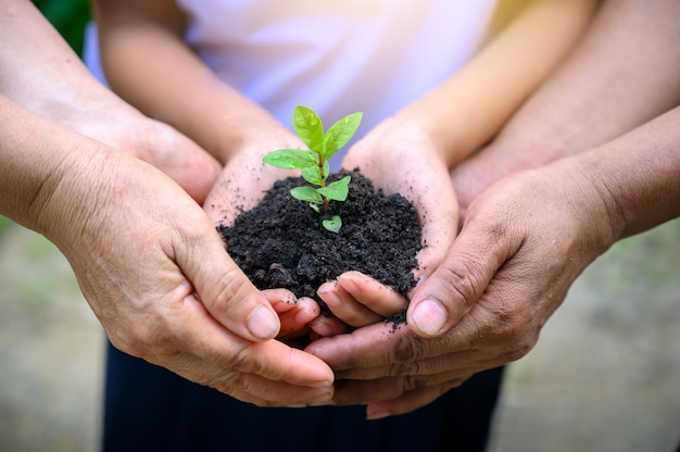 Środowisko dzień ziemi w rękach drzew rosnących sadzonek. żeńska ręka trzyma drzewa na charakter pola trawa koncepcja ochrony lasu Premium Zdjęcia