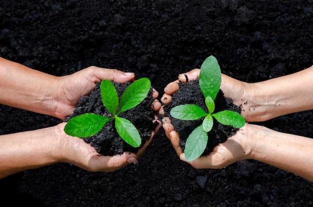 Środowisko dzień ziemi w rękach drzew rosnących sadzonek Premium Zdjęcia