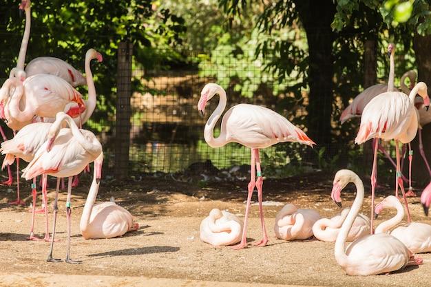Stado Flamingów, ładny Różowy Duży Ptak, Zwierzę W środowisku Przyrodniczym Premium Zdjęcia