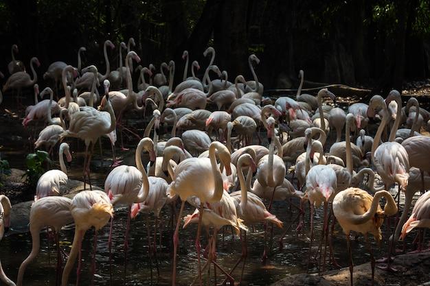 Stado Flamingów W Zoo Premium Zdjęcia