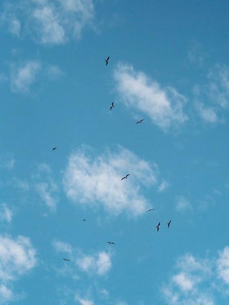 Stado Latających Petreli Z Galapagos Na Wyspach Galapagos Darmowe Zdjęcia
