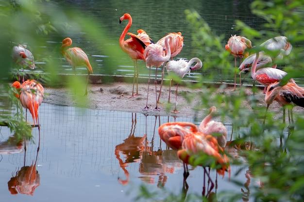 Stado Różowych Flamingów Na Stawie Premium Zdjęcia